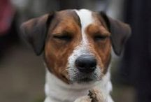 Jack Russell Joys / by Angela Booth