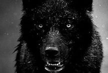 wolf / by Bruce Flyinghorse