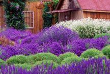 Garden  / by Karen Hansson Windsor