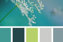 Color Palettes / by Hillary Boucher