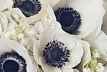 Wedding: Bouquets / by Erin Watlington