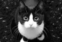 Gatos / Una de mis pasiones / by Manualidades con Huella