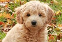 My puppy, Rocky / by Evie Huerta
