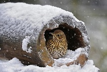 Wonderful Animals and Wild Life / Wonderful images of animals in the wild. / by Annabel Chaffer