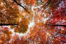 Autumnal [Ambiance] / All things Fall / by Krysta Newman