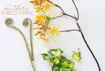 journal   anatomy of flora / CLOTH & KIND   Storied interior design and curated content from a textile addict and an art aficionado   Krista Nye Schwartz & Tami Ramsay   @tamiramsay / by Krista Nye Schwartz
