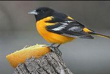 Birds / by Little Birdie Blessings