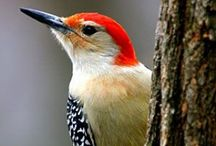 Birds & Feeders / by Joyce Weinberg