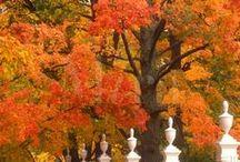 Fall / by Tamara24u