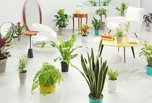 House Plants / Bringing the outdoors in for design, interiors, happiness and natural living.  / by realestate.com.au