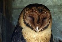 THE OWLS ARE NOT WHAT THEY SEEM / #owls / by Kylie // The Baking Bird