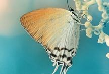 Butterfly / by Yoshihiro Ogawa