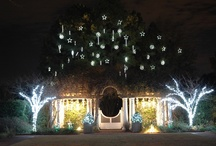 Holiday Images / Celebrating the Holidays at Daniel Stowe Botanical Garden / by Daniel Stowe Botanical Garden