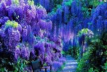 Botanical Garden / by Yoshihiro Ogawa