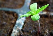 Growing from Seed / Advice and inspiration for growing plants from seed indoors and outdoors plus seedling care. / by Horticulture Magazine