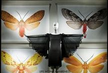 Visual Display & Merchandising / by Madeline Raynolds