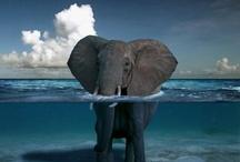 Elephants!!! / by Judy Fuglestad