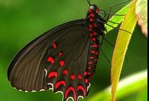 Butterflies & Dragonflies / by Judy Fuglestad