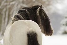 horses / by Amalie Kissler