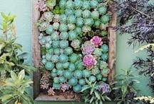 Gardening / by Margaret Ware