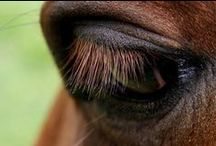 ... the divine equine ... / ... horse lover ... equestrian everything ... / by Charlotte Eslava