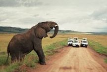 Going to Africa!!!! / by Marcela Sada