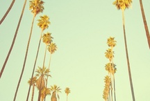 Endless Summer / by Allison Lei