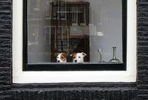 Window Display / by mary buttons