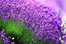 garden / Jardines con  encanto, suaves colores , acogedores , que invitan a sentarse y descansar mirando la naturaleza . Leer o trabajar en ellos.  / by Rosina Dellepiane