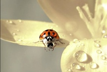 LADYBUGS / Dedicated to ladybugs b/c 1) I love them & 2) I've been collecting them since I was 3 years old! / by Jenna Cooley