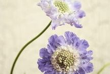flowers~ names/colors / by Patty Sweeney-Shevchik