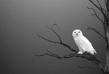 Animal Life / by Shigeru Nagahisa