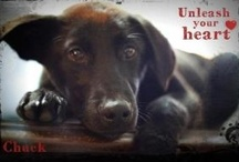 "SAVE A FUR-BABY..... animals at risk in shelters .... ADOPT/RESCUE/FOSTER / This board is dedicated to URGENT pets & kill-shelter pets ~ PLEASE ONLY POST PETS WITH LINKS  ~~~ see & post pets in Rescue / Foster needing loving homes to SEEKING A FUR-EVER HOME ~~  ("""")("""") thx ~ xx  Oh, ya' ... & remember ANY pet dog cat hamster or other animal you can help get out of the shelter may help others have the shelter space & time they need to secure a loving adopter or rescue / by uber wagmore"