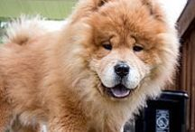 NE States ~ Pets in Rescue - No Kill Shelters Needing Adoption & Fab Fur-Ever Homes / by uber wagmore
