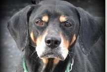 MidWest States ~ Pets Urgently Needing Love /(^.^)\ / pinning for kill shelter pets ~ save a shelter baby's life today ~ missing pets  & other urgents: Iowa Michigan, Ohio, Colorado, Montana, Minnesota, Missouri Arkansas, Kansas, Oklahoma, Wyoming, Wisconsin, Utah, Ontario Canada ~~ thx for any & all re-pins ~~  paw-leeeze click pics for current statuses - if a pet is described as no longer listed or adopted it is no longer available - I do check from time to time - but pinterest allows only a few comments at a time - so rarely do I get them noted  / by uber wagmore
