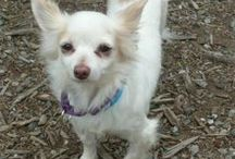 NW States ~ Pets Urgently Needing Love /(^.^)\ / pinning for kill shelter pets ~ save a shelter baby's life today ~ missing pets ~ & other urgents. WA. British Colombia Canada, Oregon, Idaho, CA north of SF,  / by uber wagmore