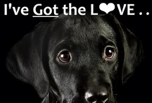 """❤ Beautiful Black aaawe-DOPTABLES !!! / Group cross-posting board for any beautiful black (or mostly black or dark) adoptable animal needing a home that's in a shelter rescue rehoming situation.... to include but not limited too ~~ dogs puppies cats kittens bunnies rabbits pigs horses cows llamas ~ if you'd like help these cuties find their happy tails by pinning to this board - click a pin I've pinned & leave a comment ... & we'll get some happy tails going !! ❤ ~ if I miss it ~ paw-leeeze try again ("""""""")("""""""") wags !! / by uber wagmore"""