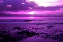 Purple Haze / by Jan Gold