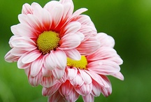 Flowers / by Jessica Savitske-Holton