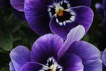 Blooming Beauty / by Bernadette Hodgkins