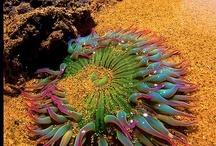 Sea Life / by Kim Boyer