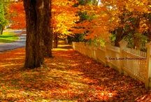 Autumn-Fall beautiful colors  / by Katie Weakland