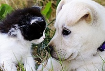 Cats & Dogs-love them so much ll / by Katie Weakland