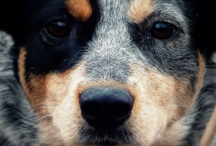 Dogs  / by Katie Weakland
