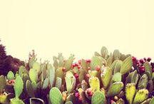 instagram / by Rachelle Dunn