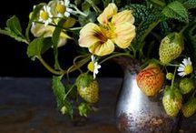 bloom / by Rachelle Dunn