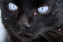 Beautiful Black Cats :) / by Nikki