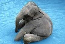 elephants / by Hayley Bogert