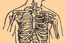 anatomy / by Ursa Major