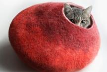 CATS / by Jura Koncius